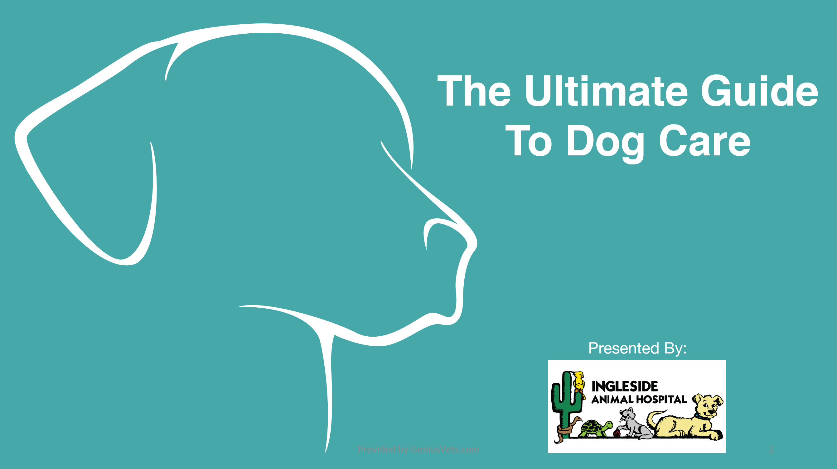 Get The Ultimate Guide To Dog Care