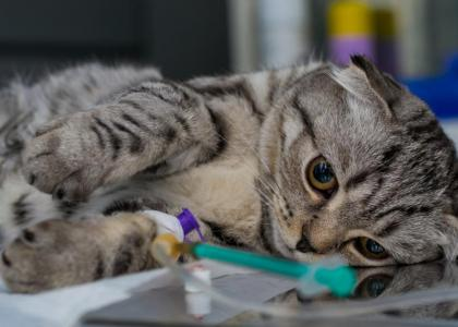 cat-anesthesia