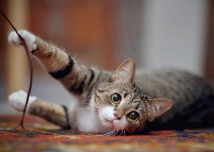 Declawing Cats Examining The Pros Cons And Alternatives Ingleside Animal Hospital